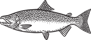 King Salmon Vector