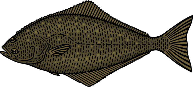 Alaskan Halibut Graphic