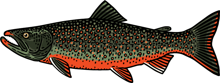 Dolly Varden Graphic