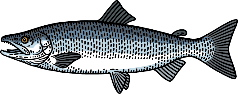 Sockeye Salmon Ocean Stage Graphic